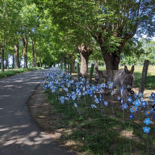 Flachsblütenfeld an der Gartenstraße ©